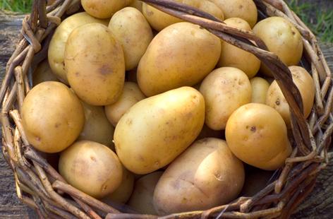 potato-HERO-fcb5952c-7a09-4a9b-934f-19464a1b362f-0-472x310