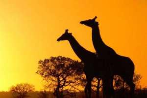 incredible2bafrica2bphotos