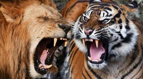 Senarai Haiwan Liar Yang Paling Menakutkan