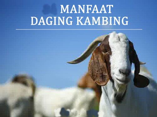 manfaat-daging-kambing