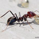 Kisah Nabi Sulaiman dan Sang Semut