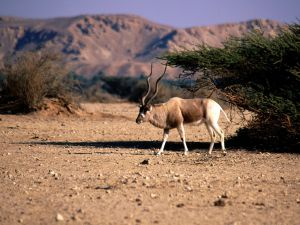 addax252brange252bwallpapers